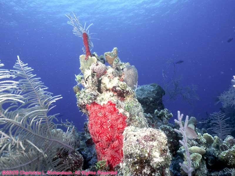 Underwater Belize