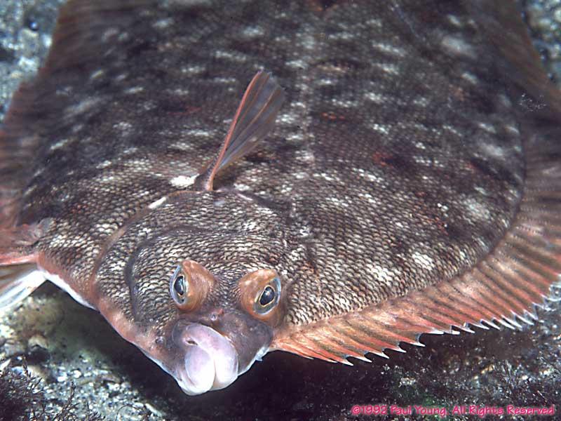 Nubble light for Winter flounder fishing